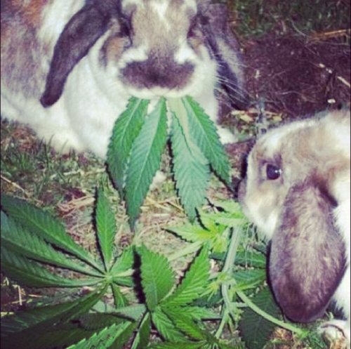 rabbit with pot plant