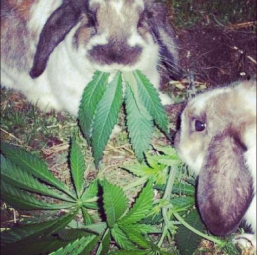 rabbit with pot plant